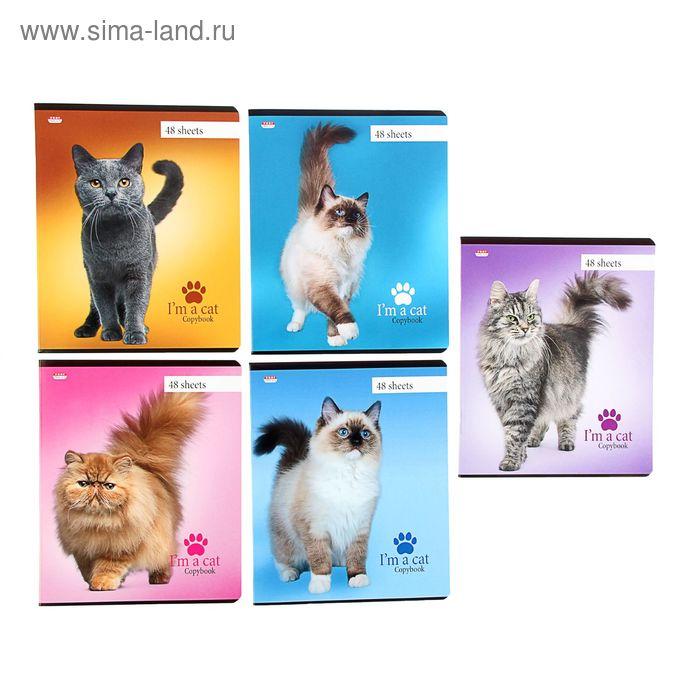 """Тетрадь 48 листов клетка """"Коты"""", картонная обложка, МИКС"""
