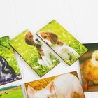 Картинки-половинки «Домашние животные» - фото 105589304