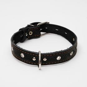 Dog collar leather embossed single-ply, 3 x 60 cm, dimensionless, mix colors