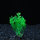 Растение искусственное аквариумное Ротала круглолистная, 10 см, зеленая
