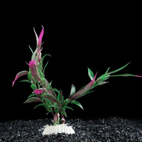 Plant artificial aquatic Alternantera Reineke, 20 cm