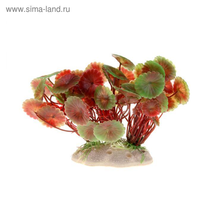 Растение искусственное аквариумное Щитолистник, 14 х 8 х 11 см