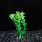 Растение искусственное аквариумное Амбулия, 10 см, зеленая