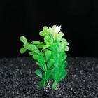 Растение искусственное аквариумное Бакопа мелколистная, 10 см