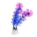 Растение искусственное аквариумное Амбулия, 10 см