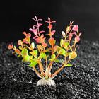 Растение искусственное аквариумное Ротала круглолистная, 10 см, бордовая