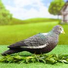 """Фигура подсадная """"Лесной голубь"""""""