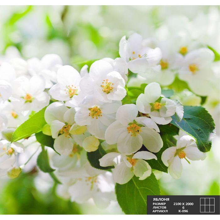 Фотообои К-096 «Яблоня» (6 листов), 210 × 200 см