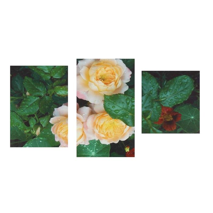 """Модульная картина на подрамнике """"Садовые розы"""", 30×44 см, 30×59 см, 30×34 см, 60×100 см"""