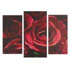 """Модульная картина на подрамнике """"Розы"""", 2 шт. — 25,5×50,5 см, 30,5×60 см, 60×100 см"""