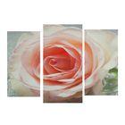 """Модульная картина на подрамнике """"Персиковая роза"""", 2 шт. — 25,5×50,5 см, 30,5×60 см, 60×100 см"""