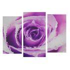 """Модульная картина на подрамнике """"Сиреневая роза"""", 2 шт. — 25,5×50,5 см, 30,5×60 см, 60×100 см"""
