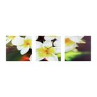 Часы-триптих модульные «Белые цветы», 40 × 100 см