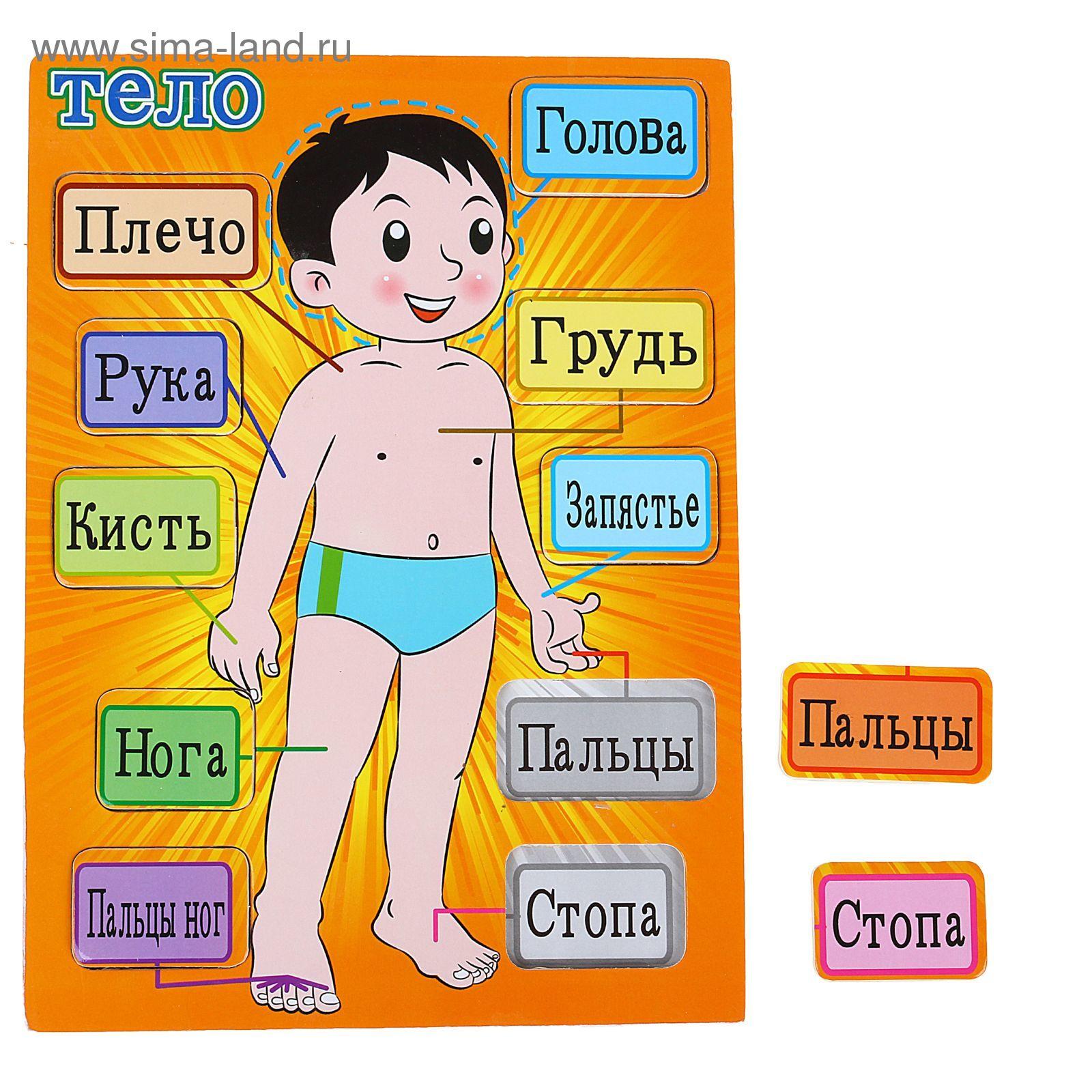 Части тела человека картинки с надписями для детей, сделать конверт под